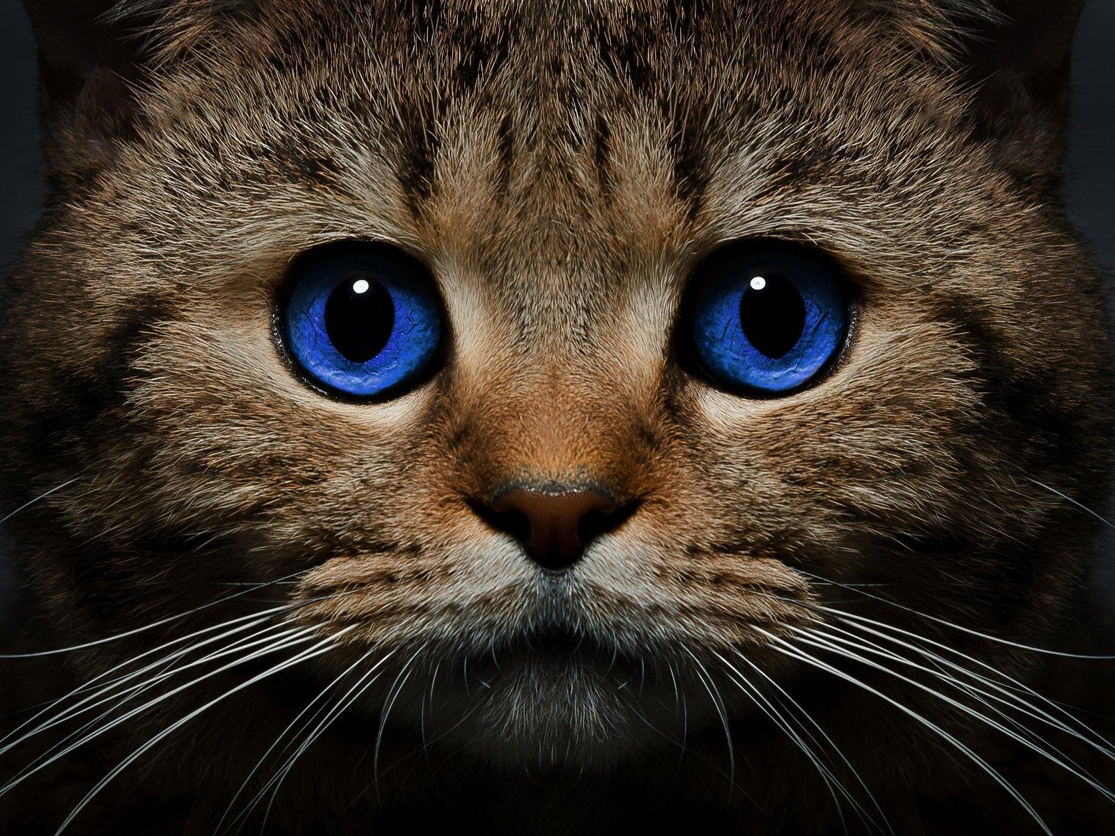 Описание Кошечки | Мой Тамагочи