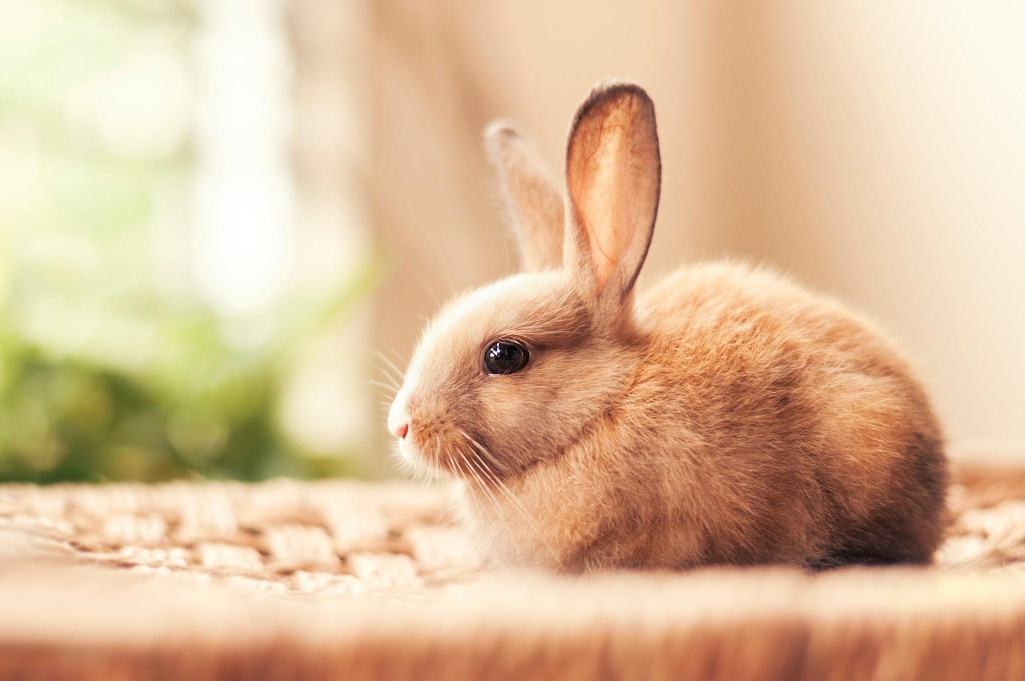Описание кролика | Мой Тамагочи