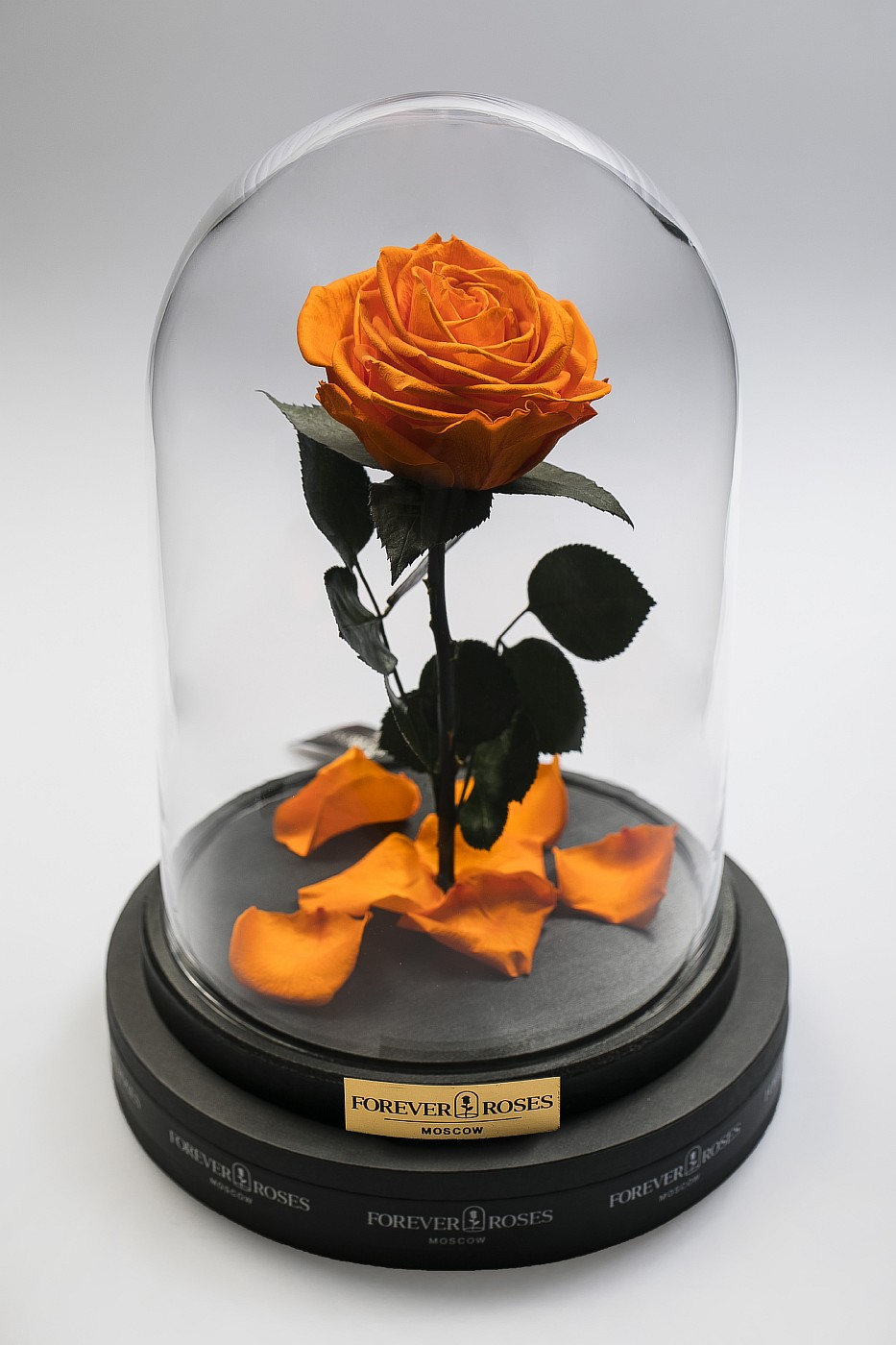 Роза в колбе (оранжевая) на прямом стебле, 27 см в Ярославле