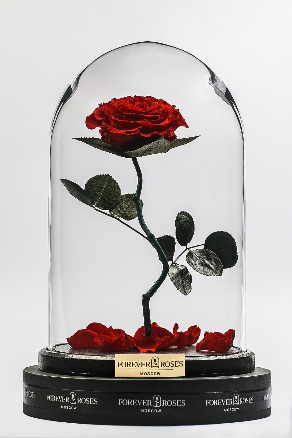 Роза в колбе (красная) на изогнутом стебле в Ярославле