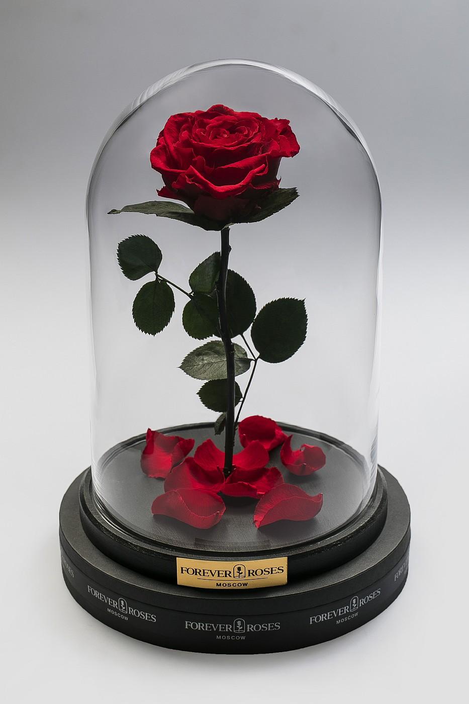 Роза в колбе (красная) на прямом стебле, 33 см в Ярославле