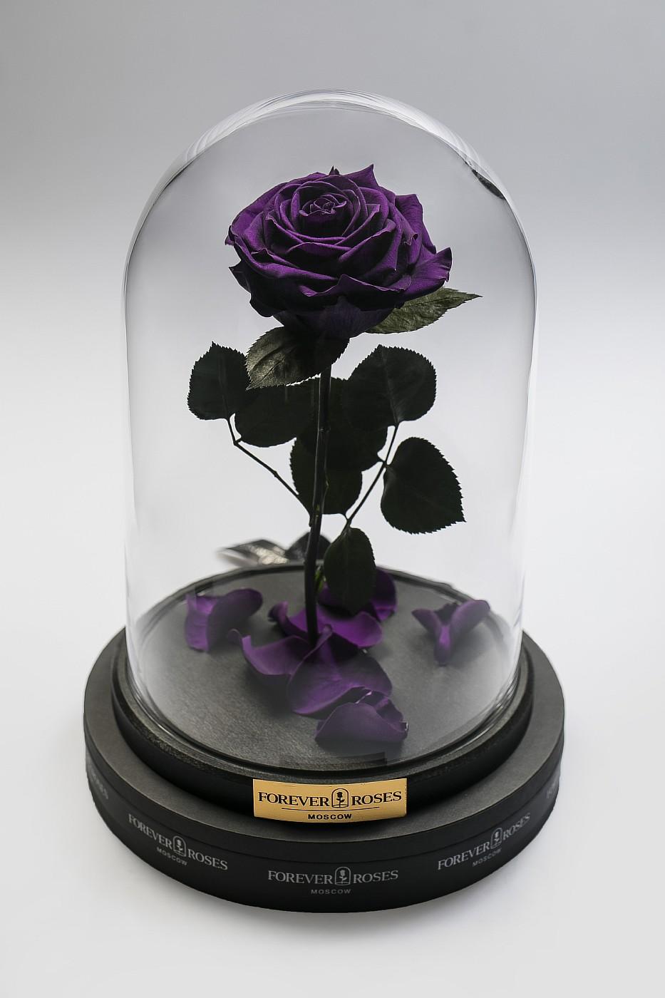 Роза в колбе (фиолетовая) на прямом стебле, 27 см в Ярославле