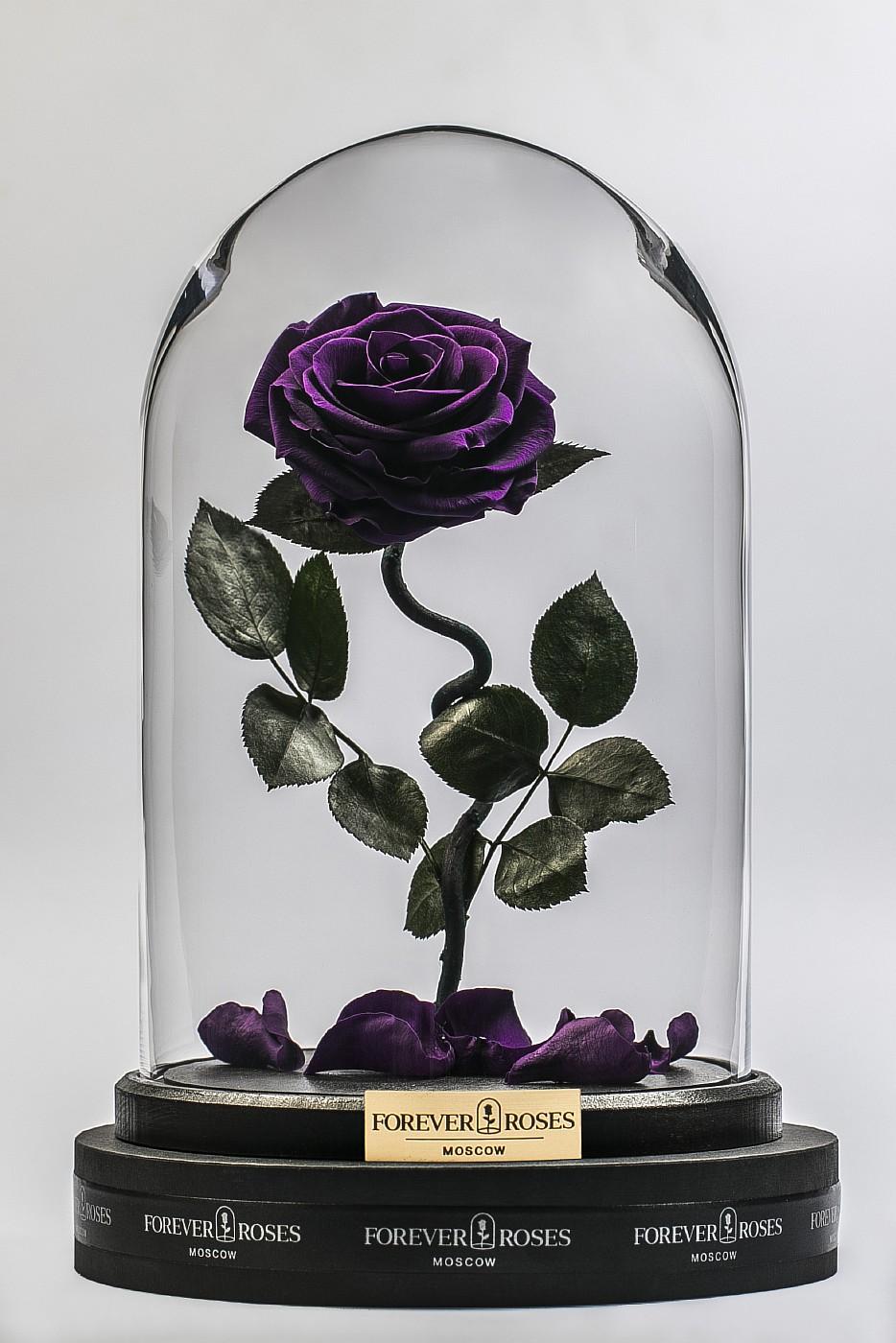 Роза в колбе (фиолетовая) на изогнутом стебле, 33 см в Ярославле