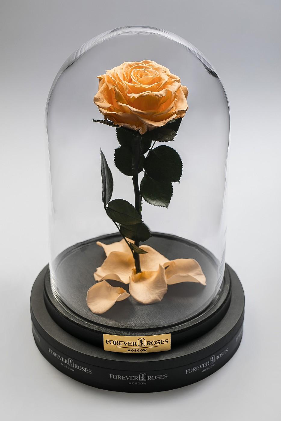 Роза в колбе (персиковый) на прямом стебле, 27 см в Ярославле