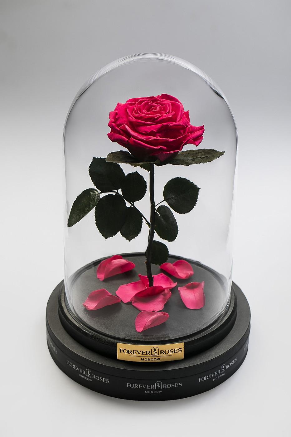 Роза в колбе (ярко розовая) на прямом стебле, 33 см в Ярославле