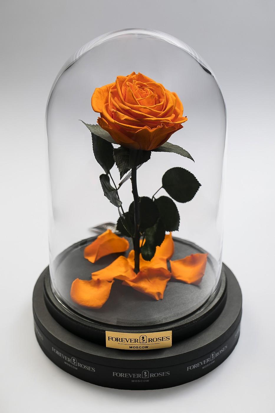 Роза в колбе (оранжевая) на прямом стебле, 33 см в Ярославле