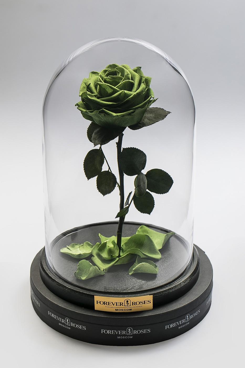 Роза в колбе (зеленая) на прямом стебле, 33 см в Ярославле