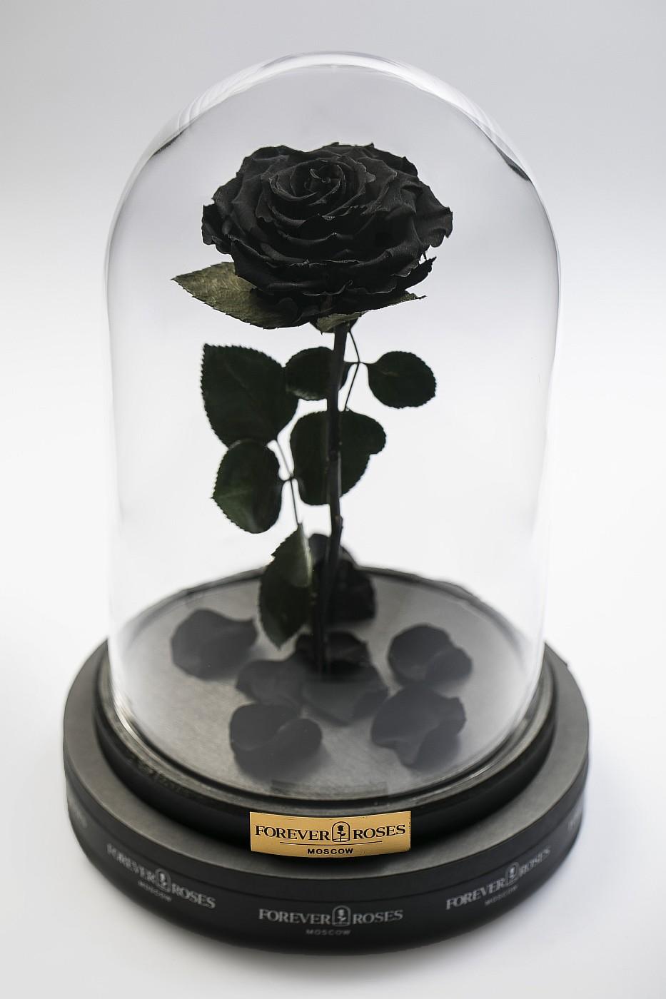 Роза в колбе (черная) на прямом стебле, 33 см в Ярославле