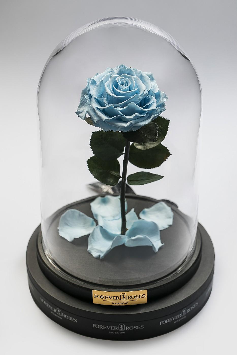 Роза в колбе (голубая) на прямом стебле, 33 см в Ярославле