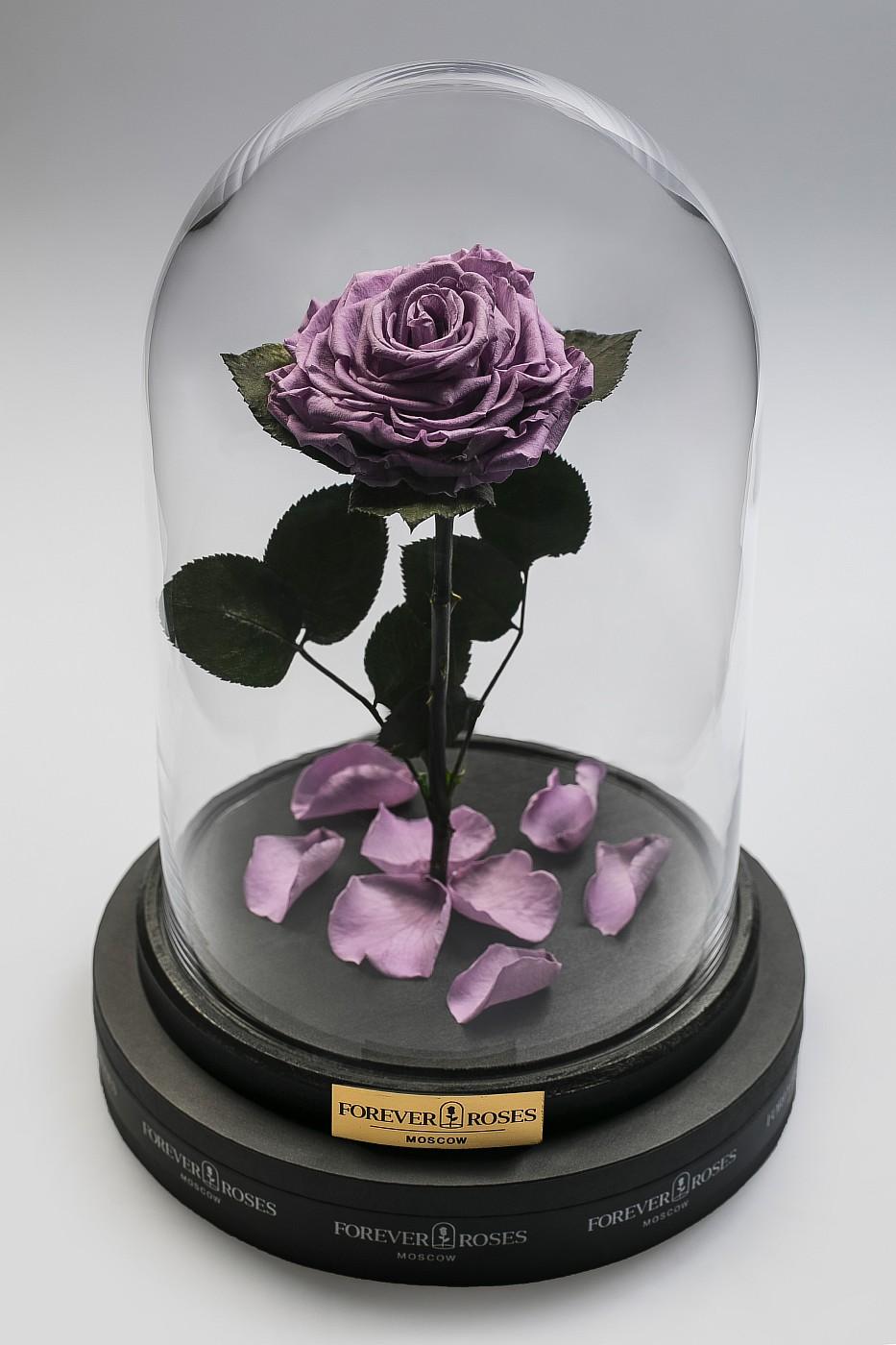 Роза в колбе (сиреневая) на прямом стебле, 33 см в Ярославле