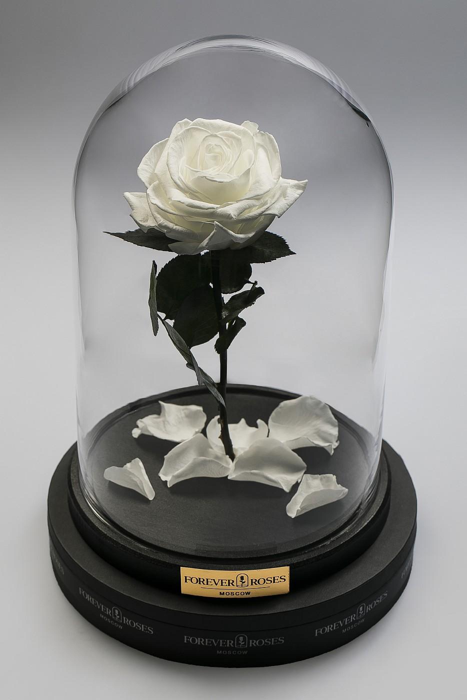 Роза в колбе (белый) на прямом стебле, 27 см в Ярославле