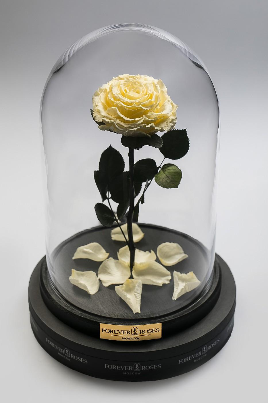 Роза в колбе (кремовый) на прямом стебле, 27 см в Ярославле