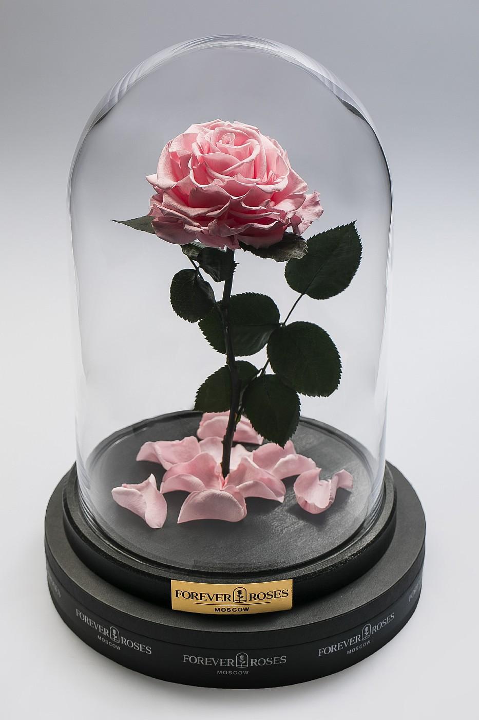 Роза в колбе (светло розовая) на прямом стебле, 33 см в Ярославле
