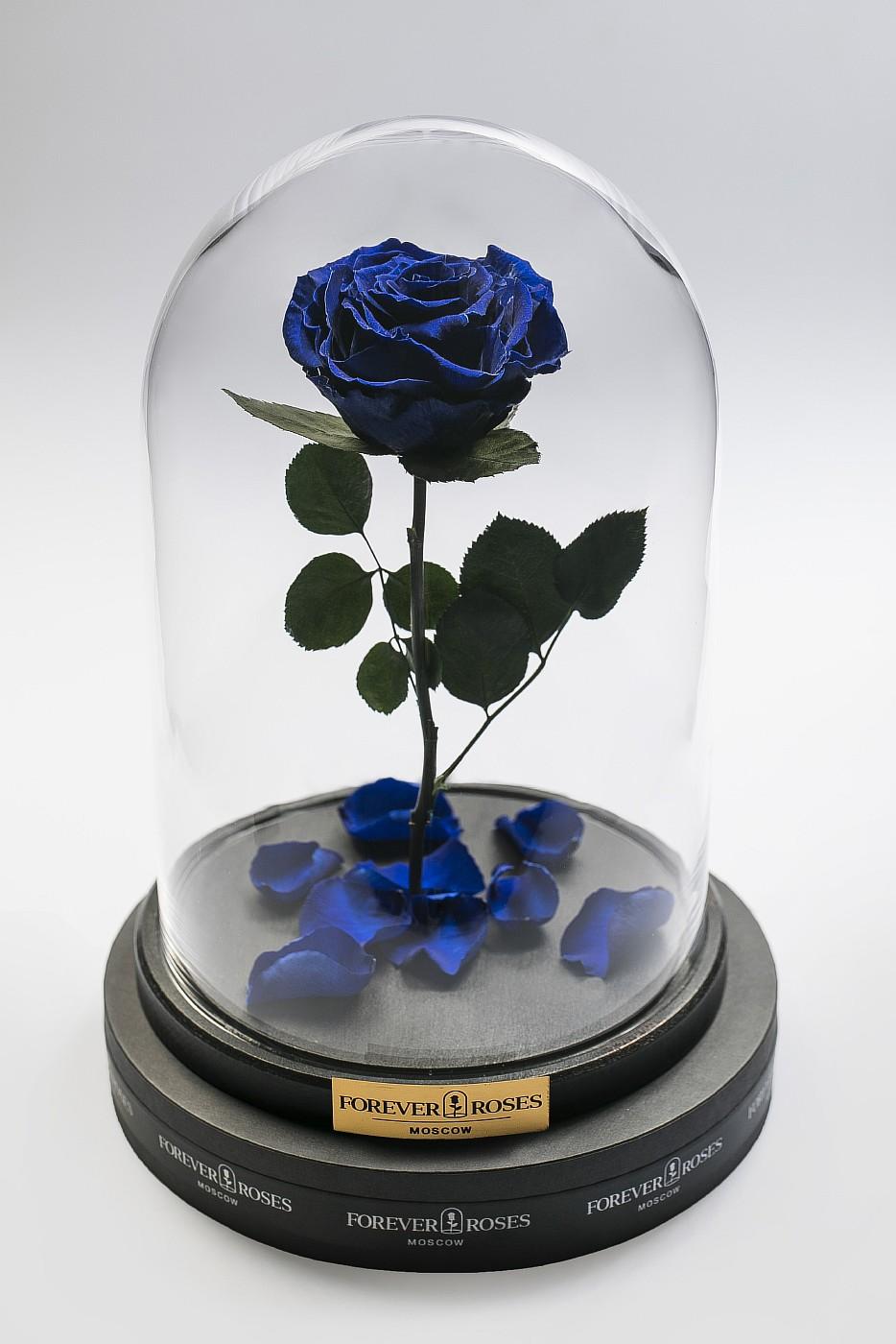 Роза в колбе (синяя) на прямом стебле, 33 см в Ярославле