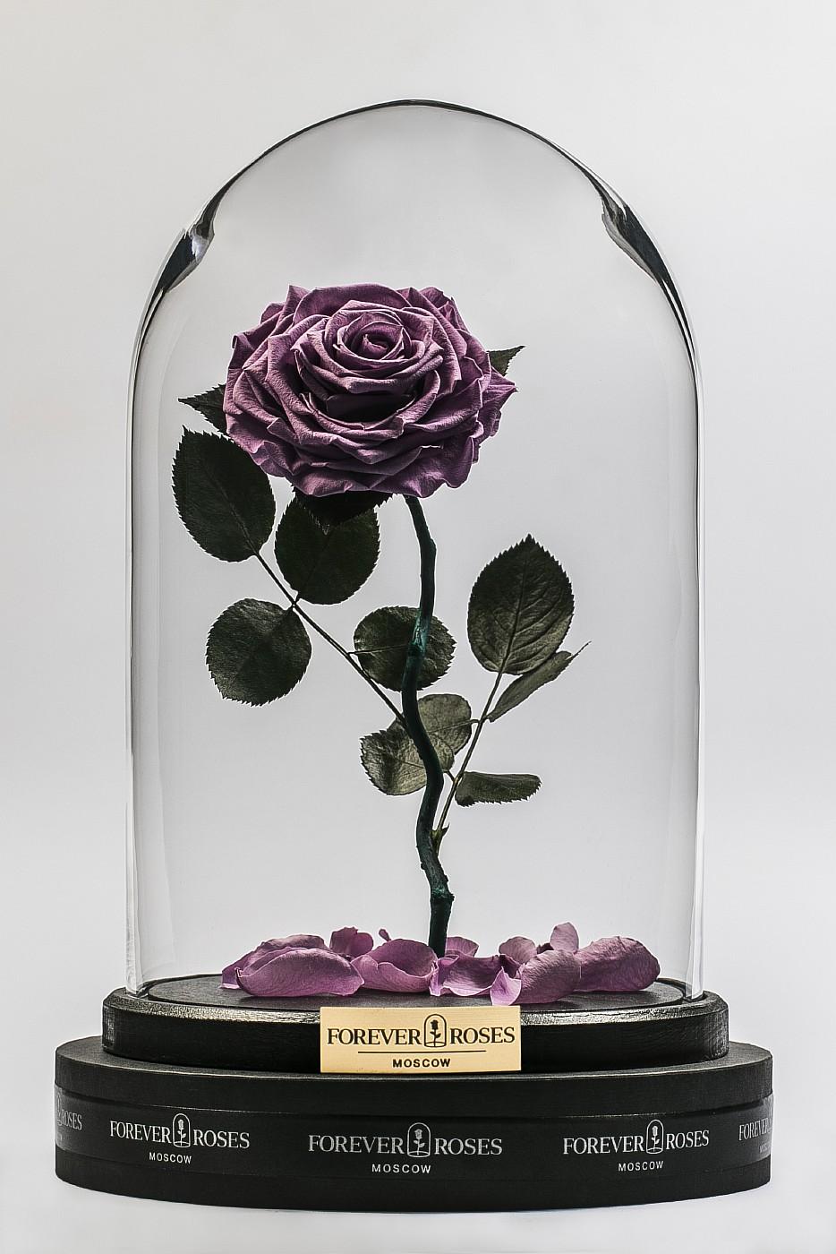 Роза в колбе (сиреневая) на изогнутом стебле, 33 см в Ярославле