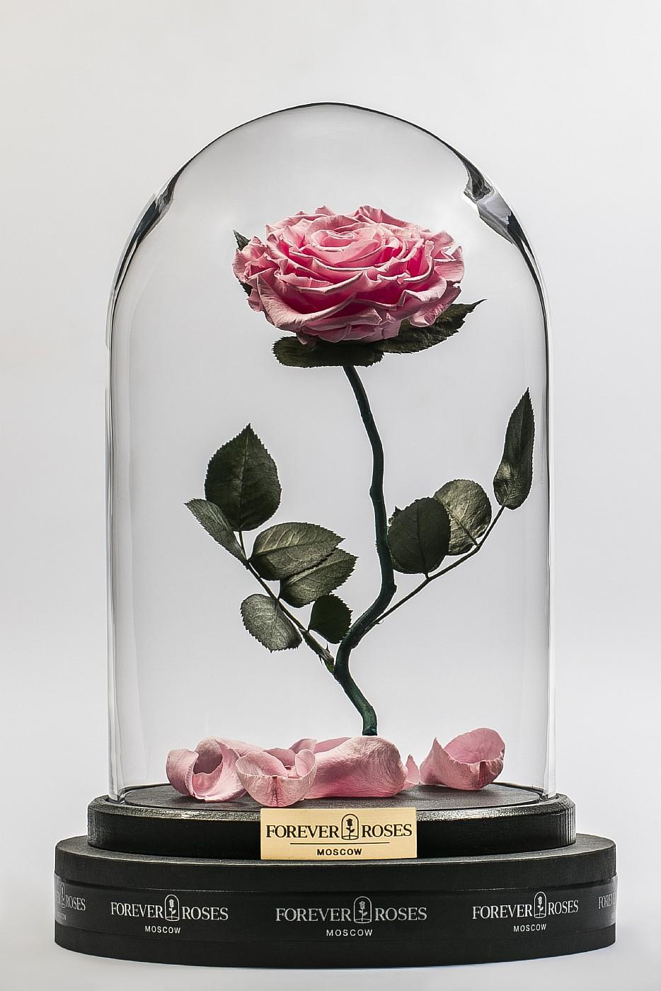 Роза в колбе (светло розовая) на изогнутом стебле, 33 см в Ярославле