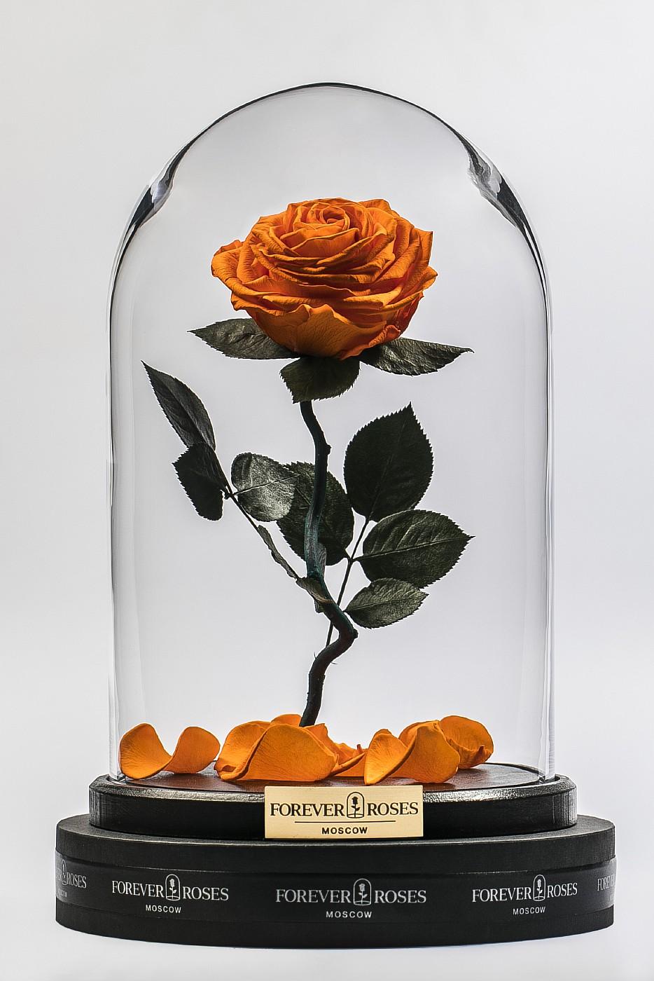 Роза в колбе (оранжевая) на изогнутом стебле, 33 см в Ярославле