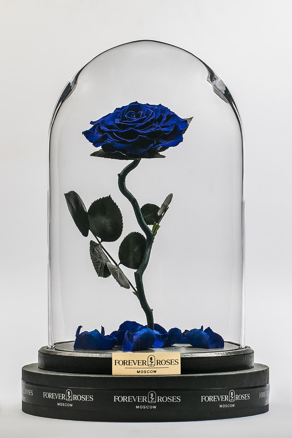 Роза в колбе (синяя) на изогнутом стебле, 33 см в Ярославле