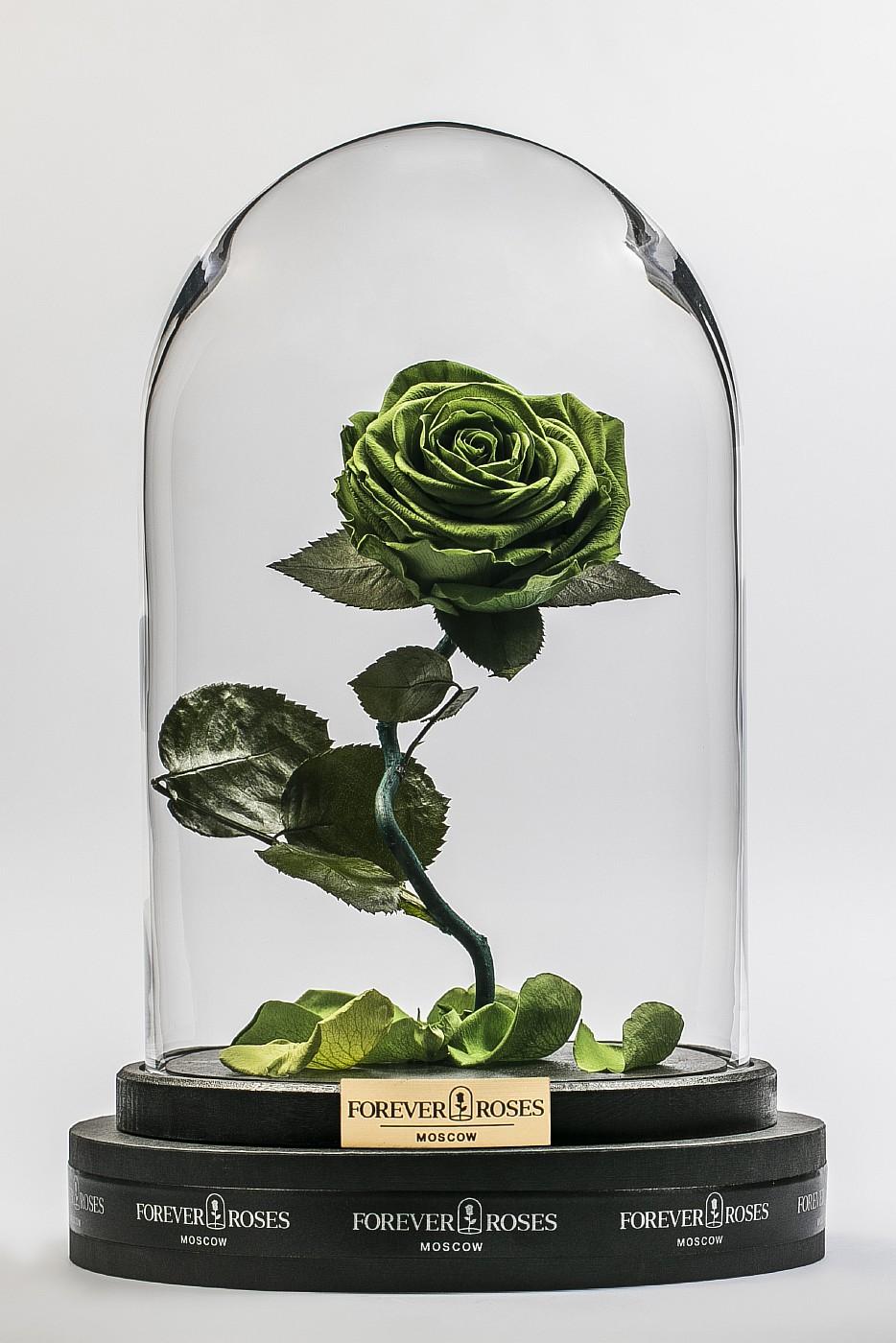 Роза в колбе (зеленая) на изогнутом стебле, 33 см в Ярославле
