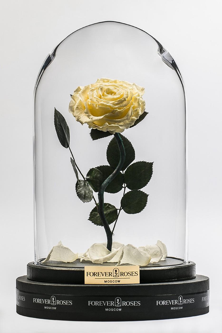 Роза в колбе (кремовый) на изогнутом стебле, 33 см в Ярославле