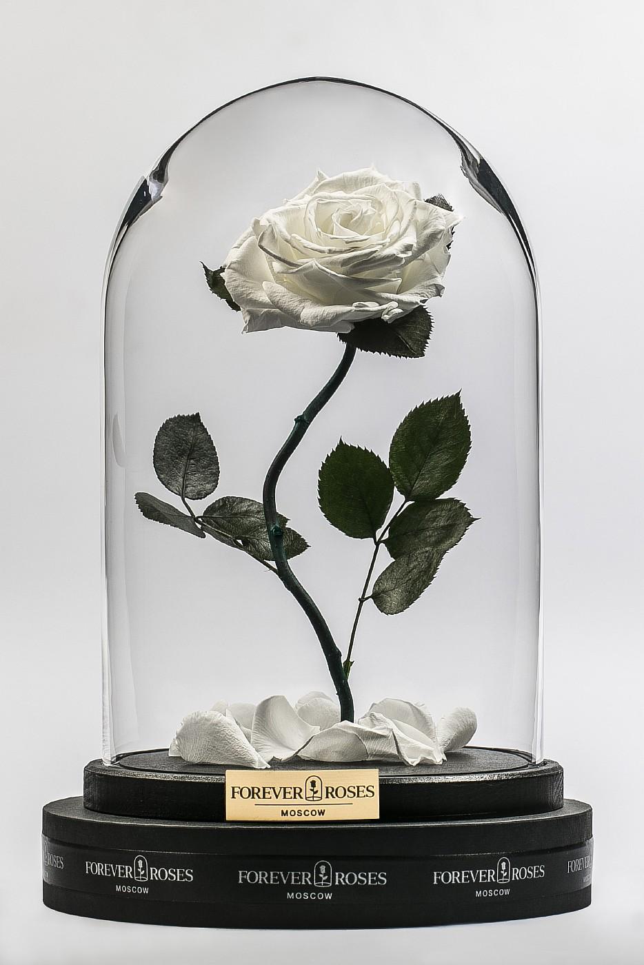 Роза в колбе (белый) на изогнутом стебле, 33 см в Ярославле