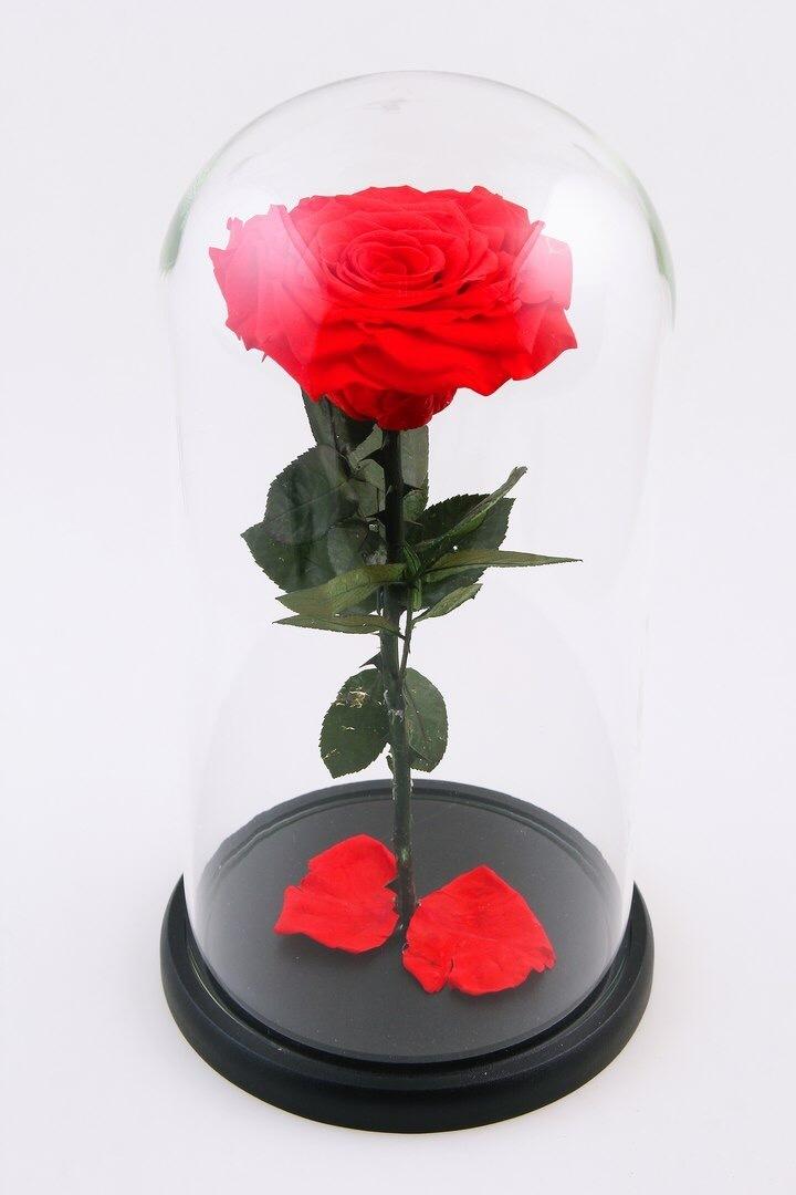 Вечная роза в колбе (красная) в Ярославле